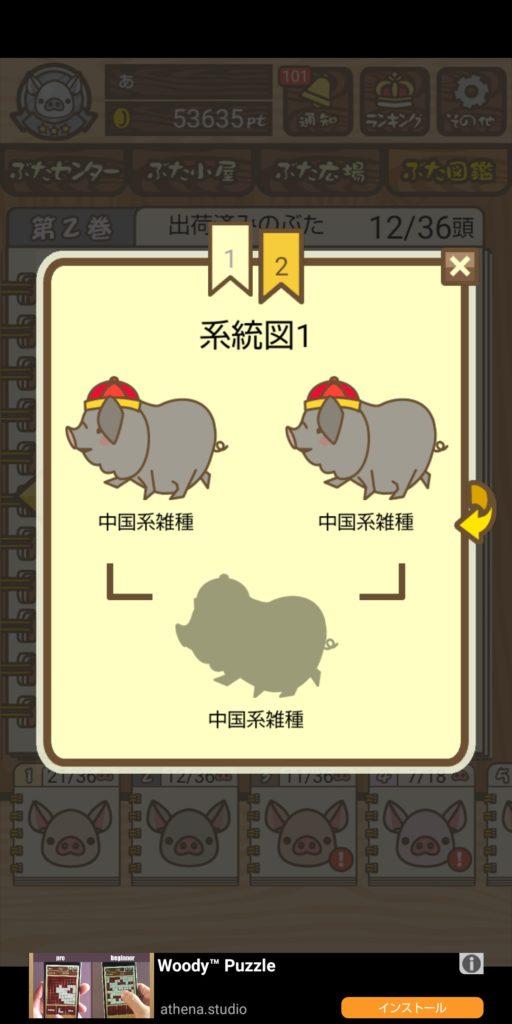 養豚場 中国系雑種